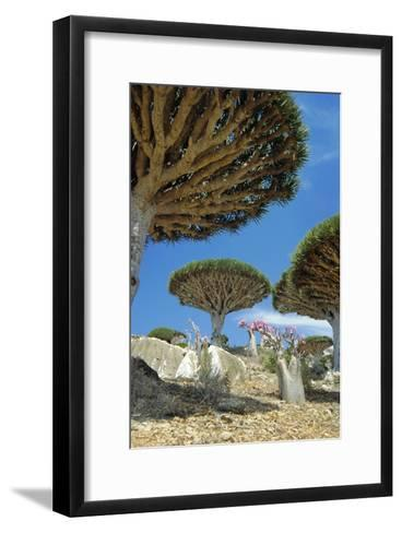 Dragon's Blood Trees-Diccon Alexander-Framed Art Print