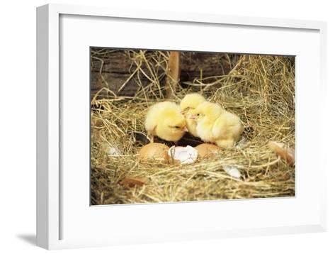 Chicks-David Aubrey-Framed Art Print