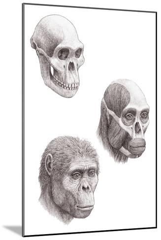 Australopithecus Africanus-Mauricio Anton-Mounted Photographic Print