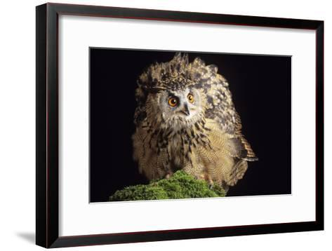 European Eagle Owl-David Aubrey-Framed Art Print