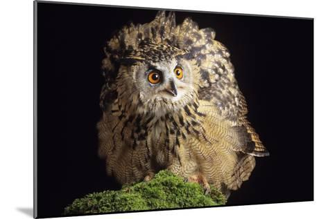 European Eagle Owl-David Aubrey-Mounted Photographic Print