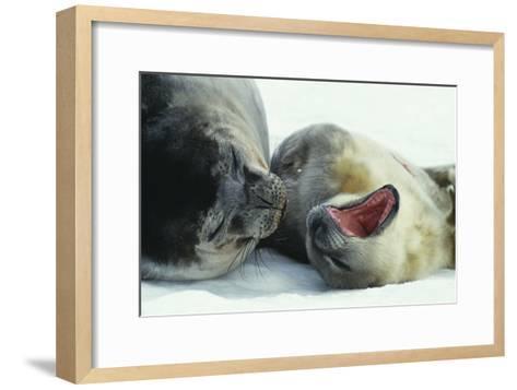 Weddell Seals-Doug Allan-Framed Art Print