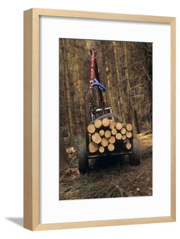 Forestry-David Aubrey-Framed Art Print