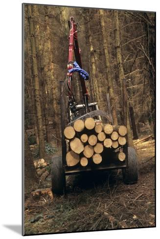 Forestry-David Aubrey-Mounted Photographic Print