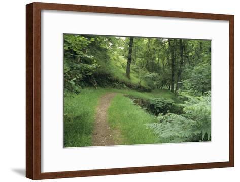 Woodland Path-David Aubrey-Framed Art Print