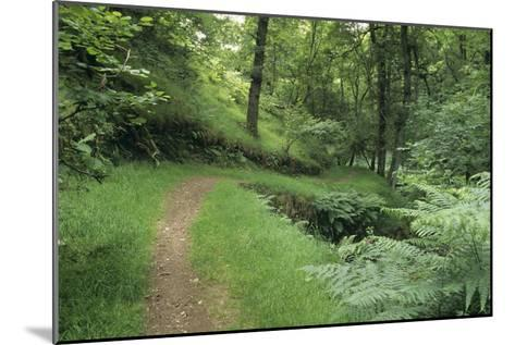 Woodland Path-David Aubrey-Mounted Photographic Print