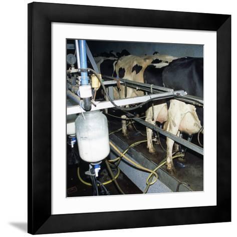 Milking Dairy Cows-David Aubrey-Framed Art Print