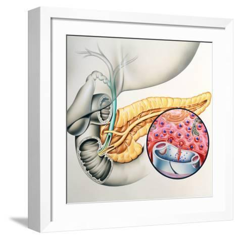Artwork of the Pancreas Showing Insulin Production-John Bavosi-Framed Art Print