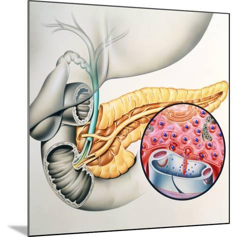 Artwork of the Pancreas Showing Insulin Production-John Bavosi-Mounted Photographic Print