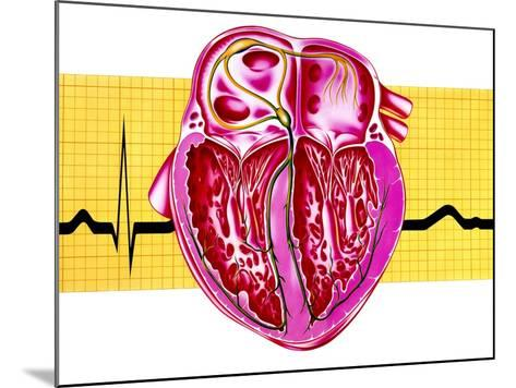 Artwork of Sectioned Heart with Healthy ECG Trace-John Bavosi-Mounted Photographic Print