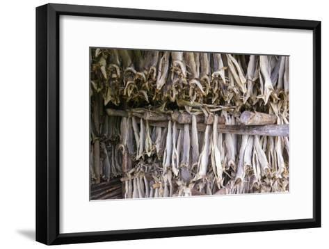 Stockfish, Norway-Dr. Juerg Alean-Framed Art Print