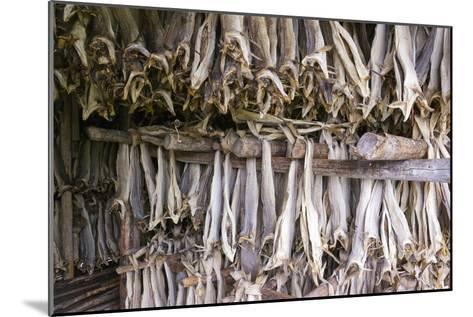 Stockfish, Norway-Dr. Juerg Alean-Mounted Photographic Print