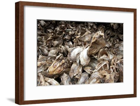 Stockfish, Norway-Dr. Juerg Alean-Framed Art Print