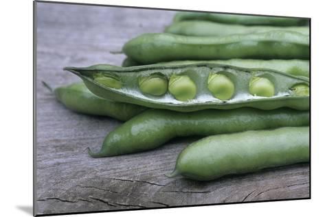 Organic Broad Beans (Vicia Faba)-Maxine Adcock-Mounted Photographic Print