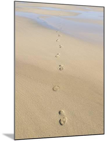 Footprints In Sand-Adrian Bicker-Mounted Photographic Print