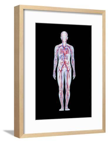 Artwork of Human Blood Circulation-John Bavosi-Framed Art Print