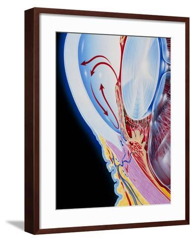 Art of Section Through Human Eye Showing Glaucoma-John Bavosi-Framed Art Print