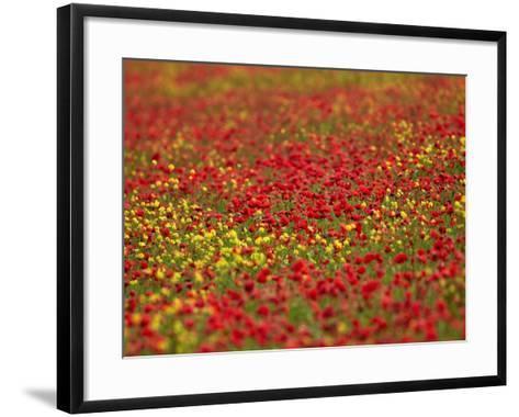 Field Poppy (Papaver Rhoeas)-Adrian Bicker-Framed Art Print