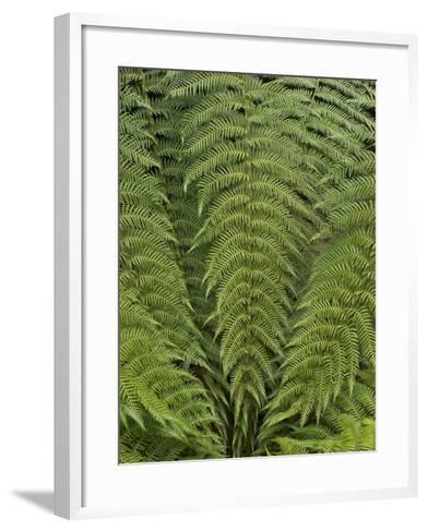 Tree Fern (Dicksonia Antarctica)-Adrian Bicker-Framed Art Print