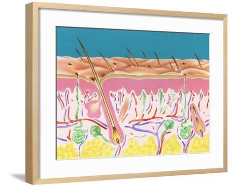Skin Section-John Bavosi-Framed Art Print
