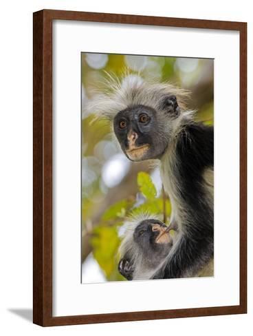 Zanzibar Red Colobus Monkeys-Tony Camacho-Framed Art Print