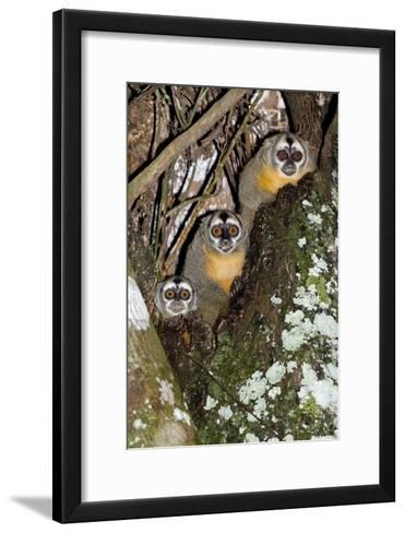 Three-striped Owl Monkeys-Tony Camacho-Framed Art Print