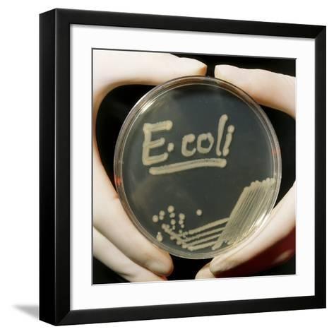 Petri Dish Culture of E.coli Bacteria-Dr. Jeremy Burgess-Framed Art Print