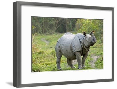 Indian Rhinoceros-Tony Camacho-Framed Art Print