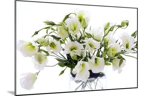 Lisianthus Flowers (Lisianthus Sp.)-Erika Craddock-Mounted Photographic Print