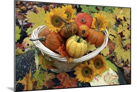 Harvested Pumpkins And Sunflowers-Erika Craddock-Mounted Photographic Print