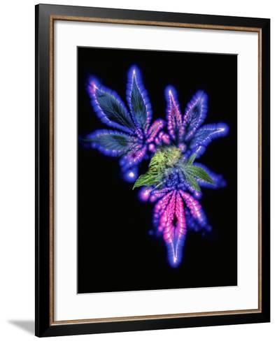 Marijuana Leaf And Bud, Kirlian Artwork- Booth-Framed Art Print