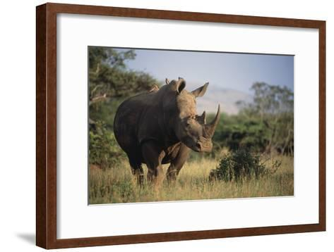 White Rhinoceros-Peter Chadwick-Framed Art Print