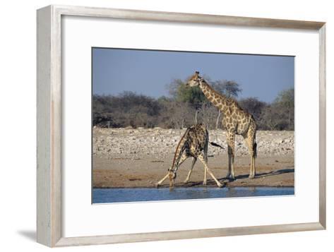 Giraffes-Peter Chadwick-Framed Art Print