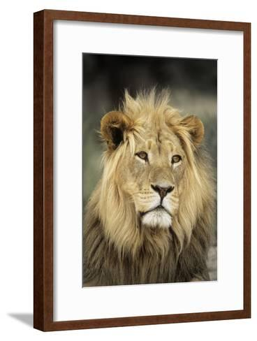 Male Lion-Peter Chadwick-Framed Art Print