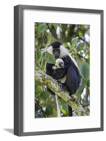 Ruwenzori Black-and-white Colobi-Tony Camacho-Framed Art Print