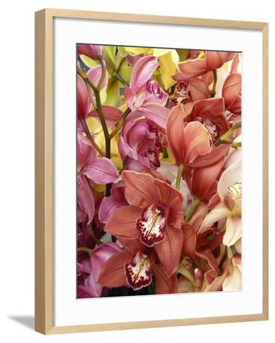 Mixed Orchids-Tony Craddock-Framed Art Print