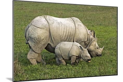 Indian Rhinoceroses-Tony Camacho-Mounted Photographic Print