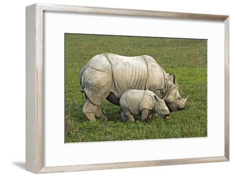 Indian Rhinoceroses-Tony Camacho-Framed Art Print