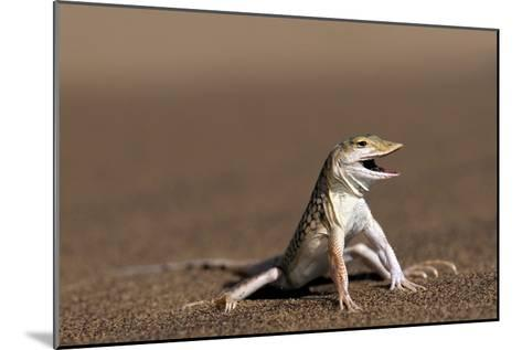 Namib Sand-diving Lizard-Tony Camacho-Mounted Photographic Print