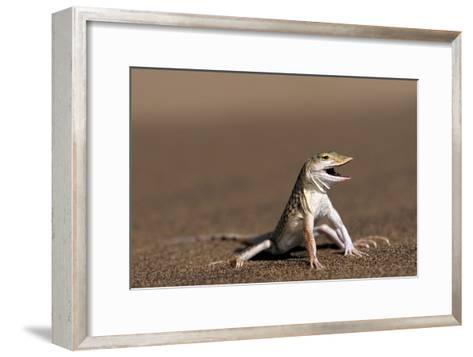Namib Sand-diving Lizard-Tony Camacho-Framed Art Print