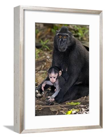 Crested Black Macaque And Baby-Tony Camacho-Framed Art Print