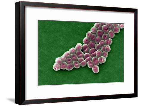 Acinetobacter Baumannii Bacteria, SEM- CDC-Framed Art Print