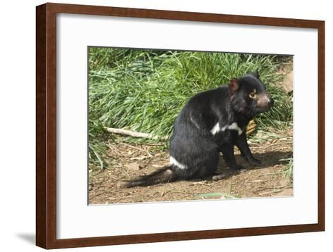 Tasmanian Devil-Tony Camacho-Framed Art Print