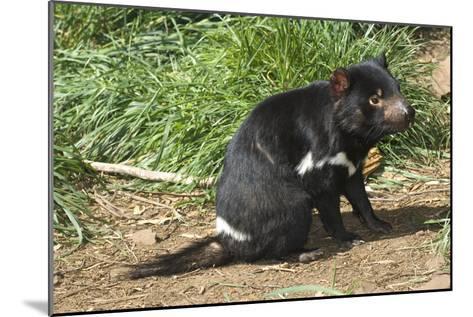 Tasmanian Devil-Tony Camacho-Mounted Photographic Print