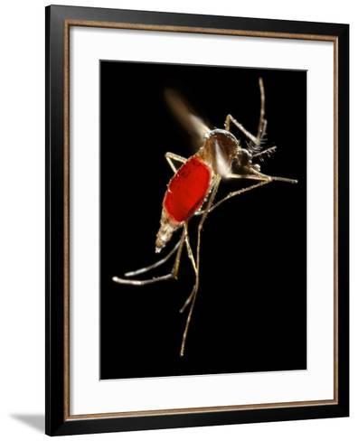 Mosquito Taking Flight- CDC-Framed Art Print