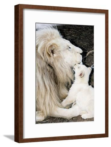 Male White Lion And Cub-Tony Camacho-Framed Art Print