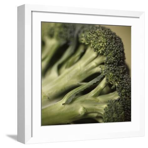 Broccoli-Cristina-Framed Art Print