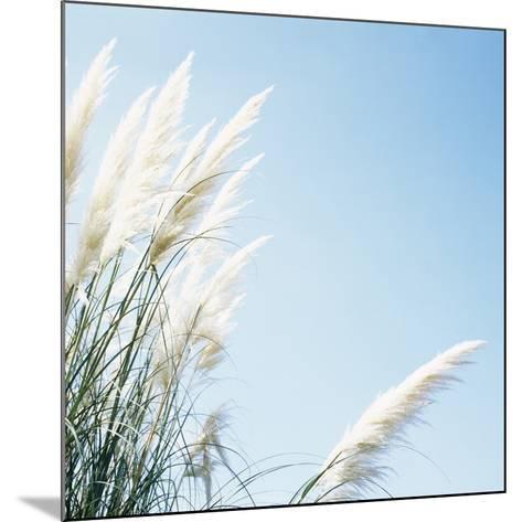 Pampas Grass-Cristina-Mounted Photographic Print