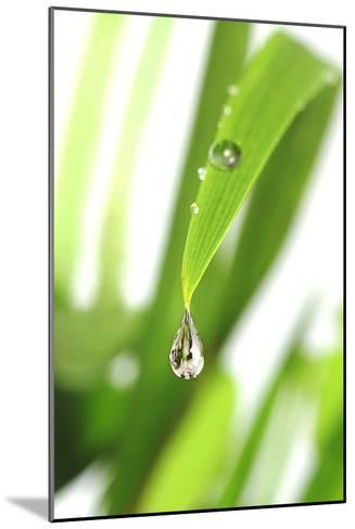 Dewdrop on a Leaf-Crown-Mounted Photographic Print