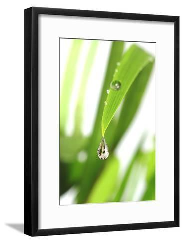 Dewdrop on a Leaf-Crown-Framed Art Print